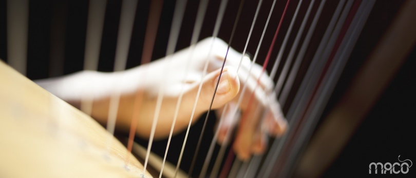The sounds of a harp for the perfect dinner
